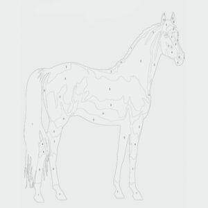 Ausmalbild Pferde